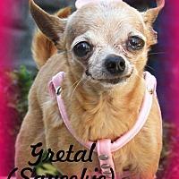Adopt A Pet :: Gretal (Squeekie) - Anaheim Hills, CA