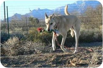 Shepherd (Unknown Type) Mix Dog for adoption in Thatcher, Arizona - Smiley