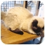 Photo 3 - Ragdoll Cat for adoption in Davis, California - Gabriel