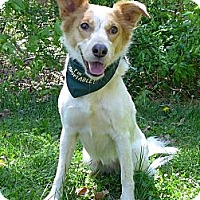 Adopt A Pet :: Fallon - Mocksville, NC