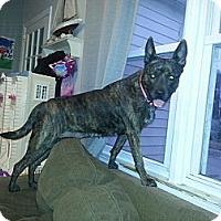 Adopt A Pet :: Holly Holly - East Rockaway, NY