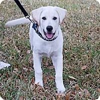 Adopt A Pet :: Finigan - Minneola, FL