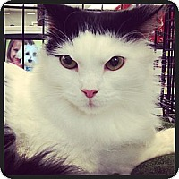 Adopt A Pet :: Mitzi - Great Mills, MD