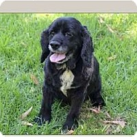 Adopt A Pet :: Maribel - San Diego, CA