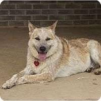 Adopt A Pet :: Buppy - Staunton, VA