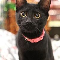Adopt A Pet :: Paige - Sacramento, CA