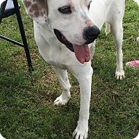Adopt A Pet :: Sampson - Natchitoches, LA