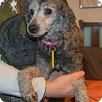 Adopt A Pet :: Cathy - Prole, IA