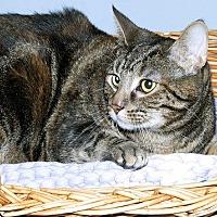 Adopt A Pet :: Sylvia - Gatineau, QC