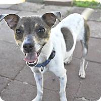 Adopt A Pet :: Jake - Woodburn, OR