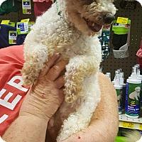 Adopt A Pet :: Jaro - Rosemead, CA