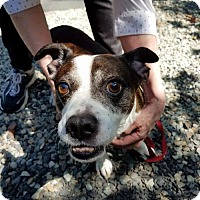Adopt A Pet :: Toby - Willows, CA