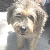 Adopt A Pet :: SHAGGY - St. Thomas, VI