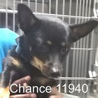 Adopt A Pet :: Chance - Manassas, VA