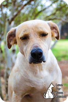 Terrier (Unknown Type, Medium) Mix Dog for adoption in Spring Branch, Texas - Junebug