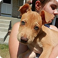 Adopt A Pet :: Lucy - South Jersey, NJ