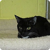 Adopt A Pet :: Ebony - Southbury, CT