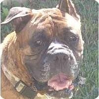 Adopt A Pet :: Rosco - Thomasville, GA