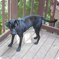 Adopt A Pet :: AIMEE - Raleigh, NC