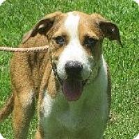 Adopt A Pet :: Alec - Salem, NH