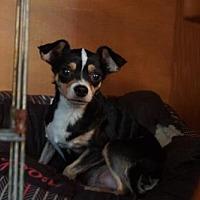 Adopt A Pet :: Jean - Evans, GA