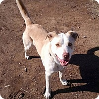 Adopt A Pet :: Sunny Sunshine - Scottsdale, AZ