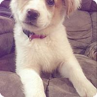 Adopt A Pet :: Sandi in CT - Manchester, CT
