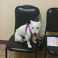 Adopt A Pet :: Lucy - Crawfordville, FL