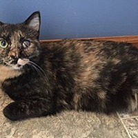 Adopt A Pet :: Anise (teenage female) - Harrisburg, PA