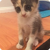 Adopt A Pet :: Faline - Anaheim Hills, CA