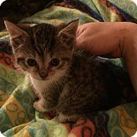 Adopt A Pet :: Tiny - Caro, MI