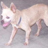 Adopt A Pet :: Skeeter - Fresno, CA