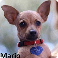 Adopt A Pet :: Mario - Lake Forest, CA