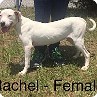 Adopt A Pet :: Rachel - Waycross, GA