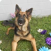 Adopt A Pet :: Strait - Lockhart, TX