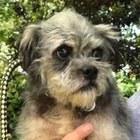 Adopt A Pet :: Binx - Irmo, SC