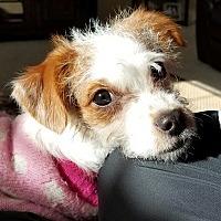 Adopt A Pet :: Mollie in Houston, TX - Austin, TX