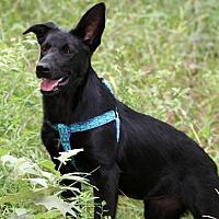 Adopt A Pet :: Ritzi - Rochester, NY