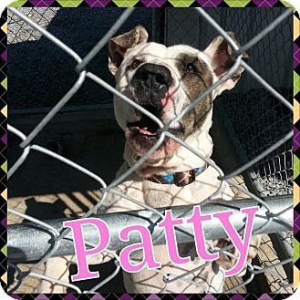 Pit Bull Terrier Mix Dog for adoption in Donaldsonville, Louisiana - Patty