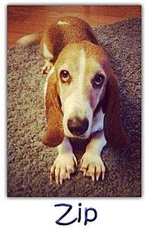 Basset Hound Mix Dog for adoption in Marietta, Georgia - Zip