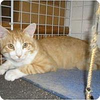 Adopt A Pet :: Porangie - lake elsinore, CA