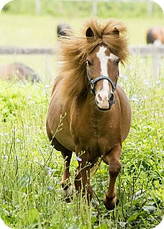 Pony - Other Mix for adoption in Saugerties, New York - Misty
