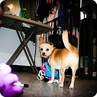Adopt A Pet :: Scooby - Eugene, OR