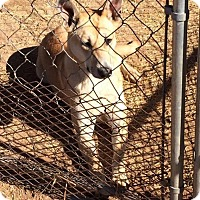 Adopt A Pet :: Tara - Post, TX
