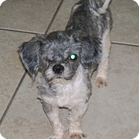 Adopt A Pet :: Cracker - Apache Junction, AZ