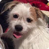 Adopt A Pet :: Sparky - Chicago, IL