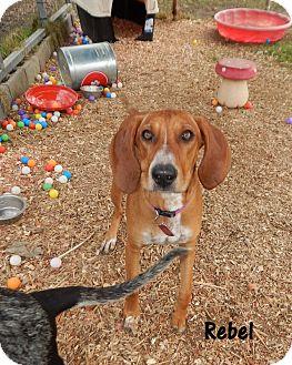 Redbone Coonhound Mix Dog for adoption in Washington, Pennsylvania - Rebel