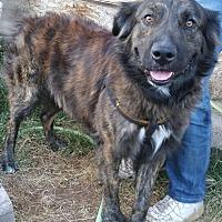 Adopt A Pet :: Chauncey - Phoenix, AZ