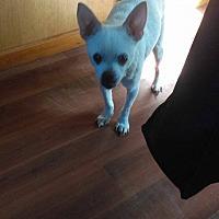 Adopt A Pet :: Chico - south plainfield, NJ