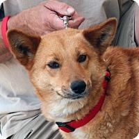 Adopt A Pet :: Maggie - Palmdale, CA